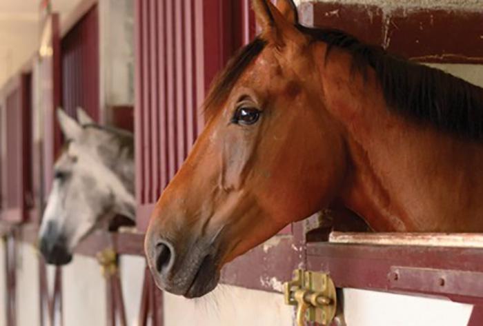 Pavimentos para caballos
